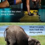 FFFC #Challenge #29:  Planking!