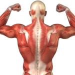 Back Exercises You Can Do at Home